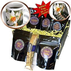 Patricia Sanders Flowers - Bright Daffodil Flower - White Flowers - Spring Photography - Coffee Gift Baskets - Coffee Gift Basket