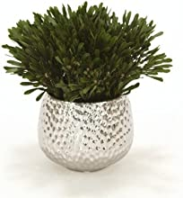 Oasis Platys Foliage Desk Top Plant in Planter