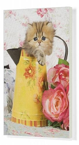 Canvas Print Of Cat - Golden Shaded Persian Kitten In Water Jug front-1002417