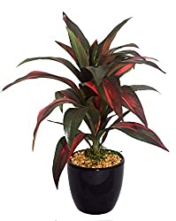 Fourwalls artificial 24 Cm Tall, Natural Looking Dracaena Bonsai Plant In A Ceramic Vase For Home Office Decor (25 Leaves)
