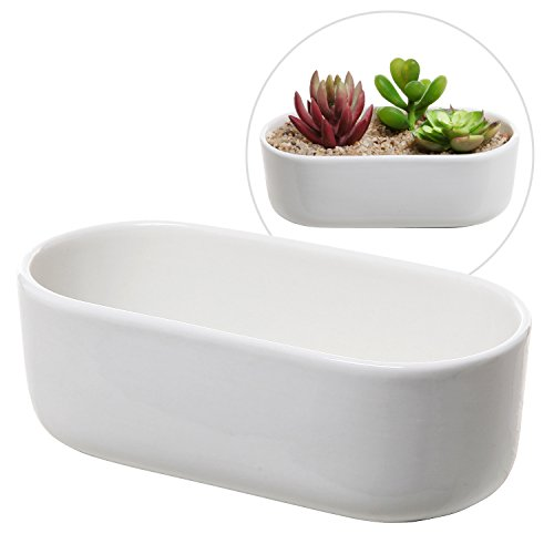 Modern Oval Design White Ceramic Succulent Plant Holder / Decorative Cactus Flower Planter Pot