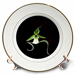 3dRose cp_53293_1 Rare Exotic Ghost Orchid Porcelain Plate, 8-Inch