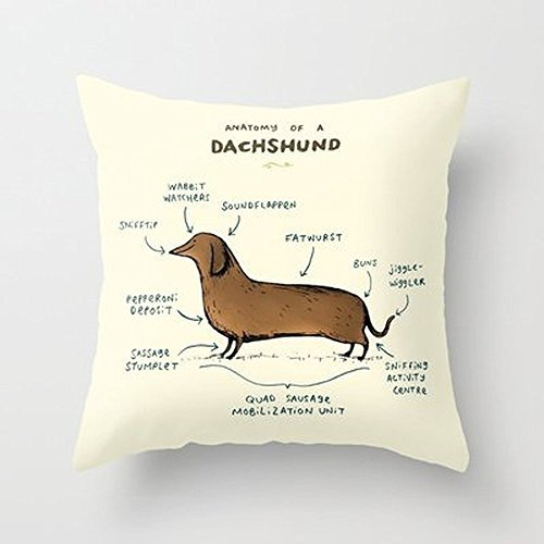 My Honey Pillow Anatomy Of A Dachshund Throw Pillow By Sophie Corriganfor Your Home