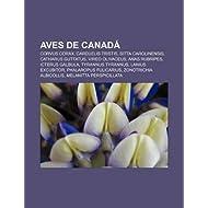 Aves de Canad: Corvus Corax, Carduelis Tristis, Sitta Carolinensis, Catharus Guttatus, Vireo Olivaceus, Anas Rubripes...