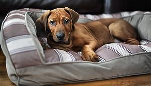 Wolfybeds Luxury Sofa Dog Bed Size Medium by Wolfybeds