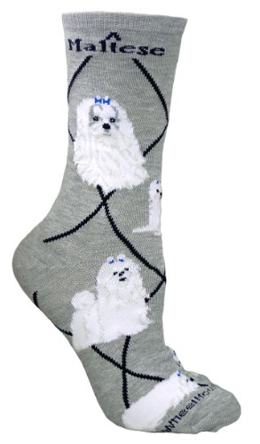 Maltese Cotton Puppy Dog Breed Animal Socks 9-11 front-11708