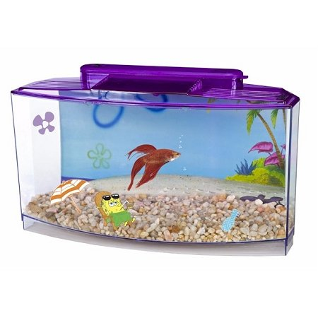 Penn Flax SpongeBob Large Betta Tank Review
