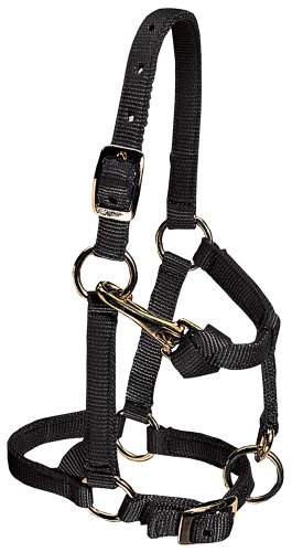 Weaver Leather Miniature Horse Adjustable Chin and Throat Snap Halter, Black, Large