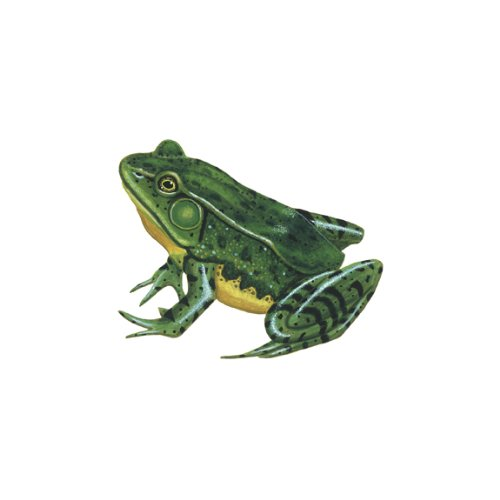 Wild Life Animals Wall Sticker Mural Frog - 1