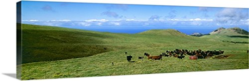 alvis-upitis-gallery-wrapped-canvas-entitled-black-angus-red-angus-and-hereford-beef-cattle-on-a-gre