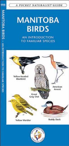 Manitoba Birds: A Folding Pocket Guide to Familiar Species (Pocket Naturalist Guide Series)