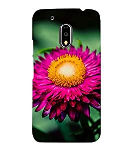 PINK BLOOMING FLOWER DEPICTING THE BEAUTY OF NATURE 3D Hard Polycarbonate Designer Back Case Cover for Motorola Moto G4 Plus