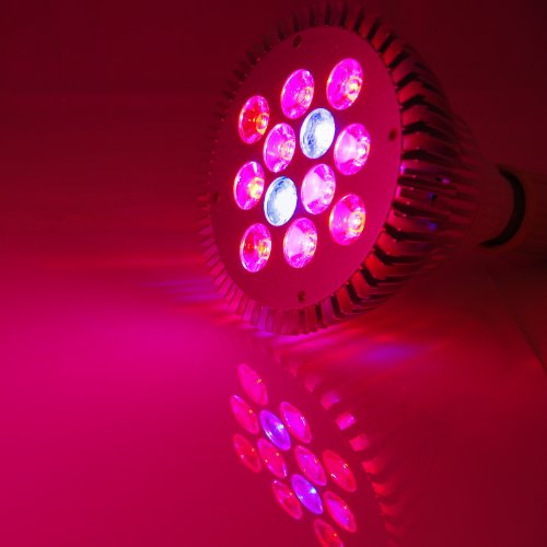 Abi Full Spectrum 12W Led Grow Light Bulb For Veg And Flower, E26 Base (Red 610-640 Nm, Blue 450-470 Nm)