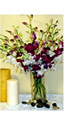 Fresh Flowers 20 Dendrobium Orchids Special Mix with Vase