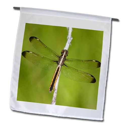 Danita Delimont - Dragonflies - Spangled Skimmer, Libellula cyanea, female in wetland, Marion Co. IL - Flags басовый усилитель ampeg svt 3pro