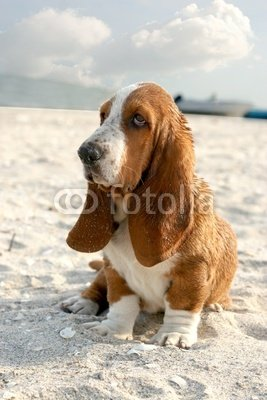 """Wallmonkeys Peel and Stick Wall Decals - Basset Hound - 18""""H x 12""""W Removable Graphic"""