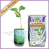 """""""Happy Birthday"""" Planter Kit - Just Add Water and Watch Your """"Happy Birthday"""" Message Grow Engraved on the Plant. 100% Guarantee to Grow Indoor/outdoor"""