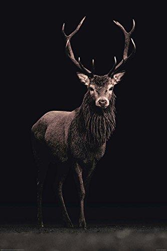 poster-kings-of-nature-cerf-61cm-x-915cm-un-joli-emballage-cadeau
