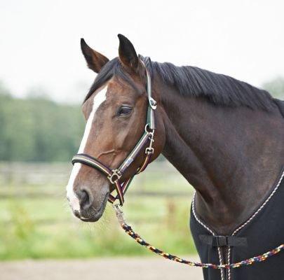 BUSSE everline Halfter CHAMPION-COLOR, Pony,