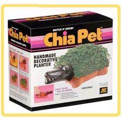 chia pet how to grow