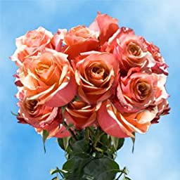 75 Cherry Brandy Roses Long Orange-Terracote Roses