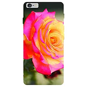 Zeerow Hard Case Mobile Cover for I Phone 5