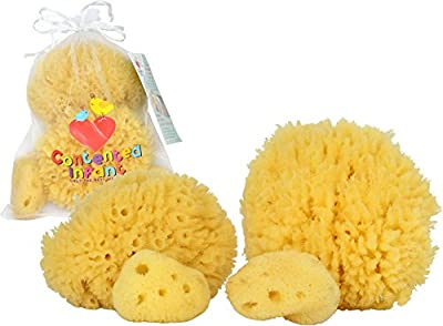 Natural Sea Sponges for Newborn, Baby & Toddler Bath: Gentle Hypoallergenic Baby Shower Spa Care Gift Set by Contented Infantª