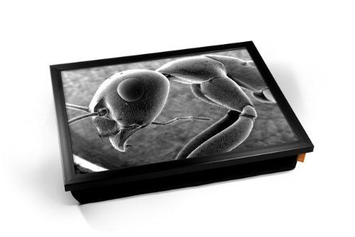 Micro Microscopic Ant Insect Bug