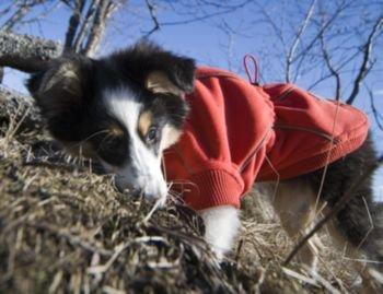Hurtta Waterproof Fleece Dog Jacket 12in