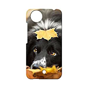 G-STAR Designer Printed Back case cover for Micromax A1 (AQ4502) - G6506