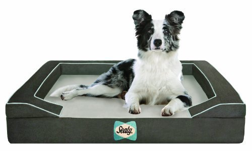 sealy-dog-bed-with-quad-layer-technology-medium-modern-gray-by-sealy-dog-bed