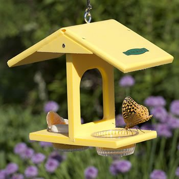 Make Butterfly Feeder front-1032796