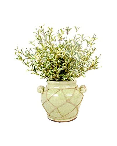 Creative Displays Oregano Pot, Green/Multi