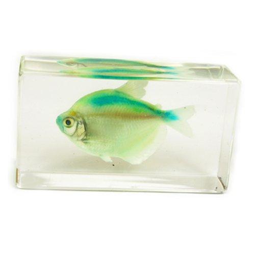 """Green Skirt Tetra Fish Paperweight (2.9x1.6x1"""")"""