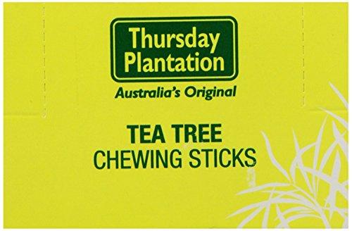 Thursday Plantation Tea Tree Chewing Sticks -- 600 Toothpicks