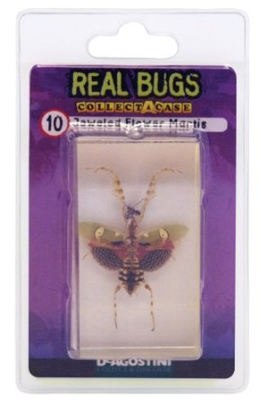 DeAgostini Real Bugs Jeweled Flower Mantis Bug - 1