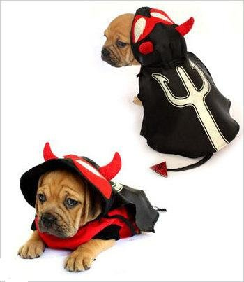 4ffe69bb5 If you are looking for an Devil Costume For Dogs Size 1 8 l x 10 5 x 12 g -  . Take a look here you will find reasonable prices and many special offers.