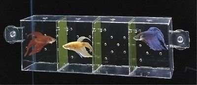 Betta Condo Isolation Tank BC1 Penn Plax Comes with 2 sets of partitions so you can choose whether the Betta's can see each other or not