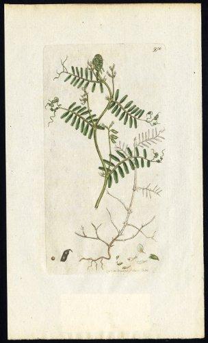 diseno-de-hairy-botanica-theprintscollector-diseno-de-madera-envejecida-con-funcion-de-tara-ervum-hi