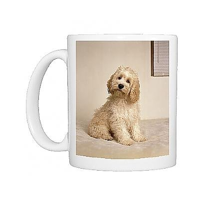 Photo Mug of Cockapoo Dog - crossbreed between a Cocker Spaniel a a Poodle from Ardea Wildlife Pets