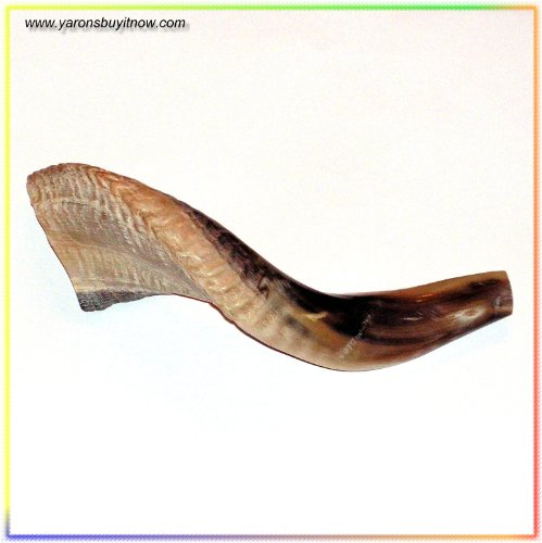 New Kosher Shofar 9