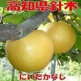 高知県産 特産品 新高梨 針木産 5,6玉 4kg秀品