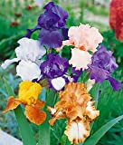 Mixed Tall German Bearded Iris – 5 root divisions