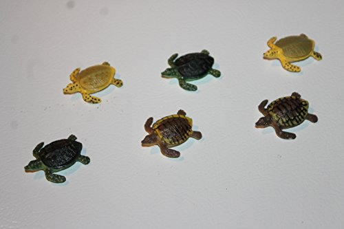 Designer Refrigerator Magnets - Baby Sea Turtle Six Piece Collection front-499457