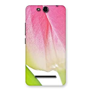 Ajay Enterprises Pink And White Rose Back Case Cover for Micromax Canvas Juice 3 Q392