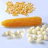 David's Garden Seeds Popcorn Mushroom 8577 (Yellow) 100 Non-GMO, Hybrid Seeds (Color: Yellow)