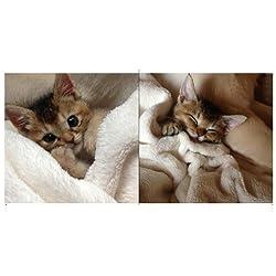 ありがとう! わさびちゃん:カラスに襲われた子猫は天使になった