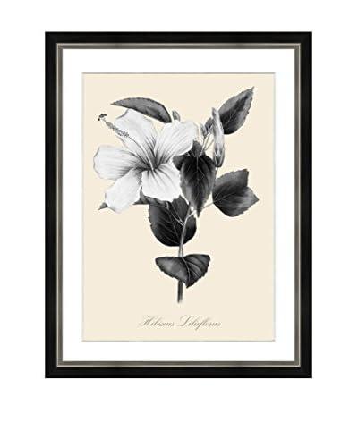 Art Source Cream Botanical Print II, Multi