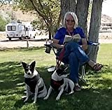 rvsue and her canine crew
