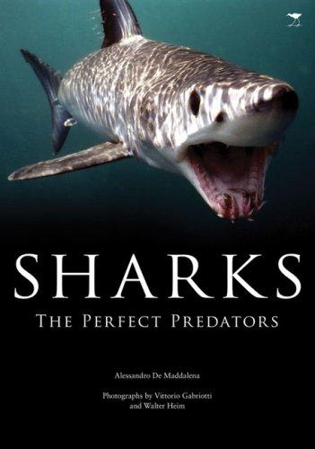 Sharks: The Perfect Predator